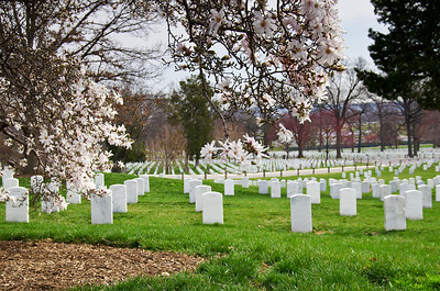 Arlington National Cemetery with Cherry Blossom