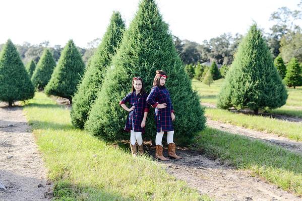 Tree Farm 2015