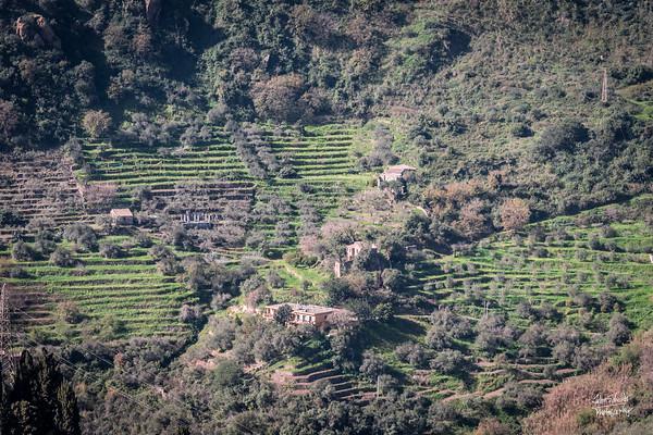 Terraced hillsides