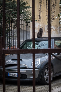 A cat guarding his owner's card along the steps to the Vatican