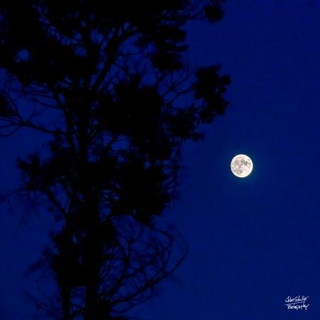 Moonrise Near the Canyon