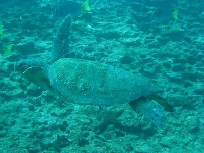 Diving in the Galapagos (43 of 392)