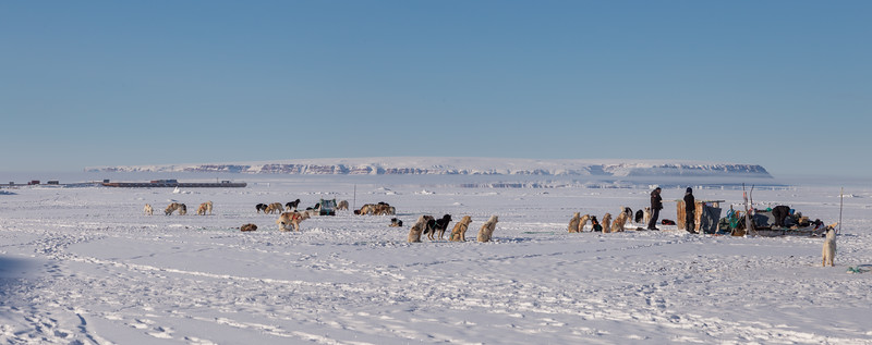 Some of the dogsleds down on the ice