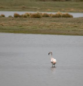 A flamingo!