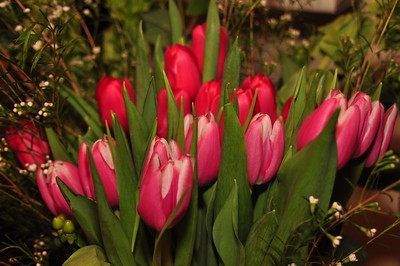 Tulips from KatiMac Floral Designs