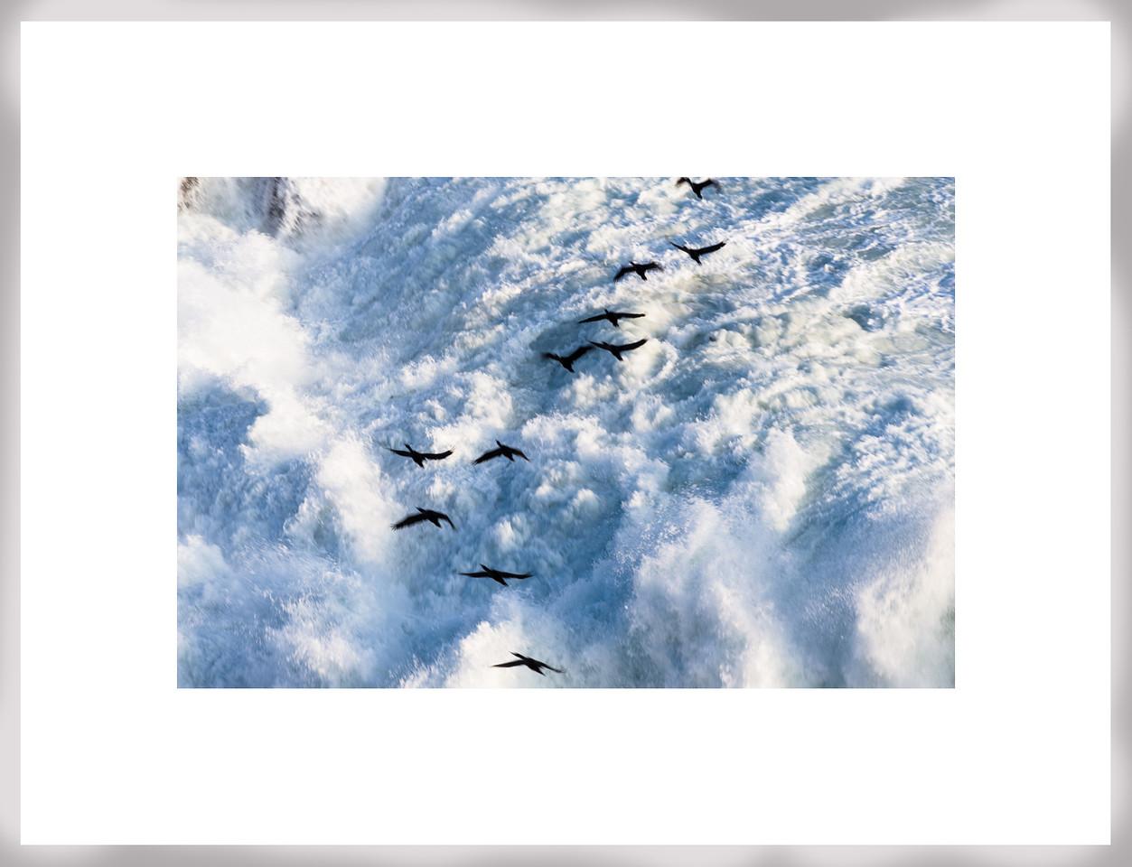 Cormoranes en Portada de Antofagasta