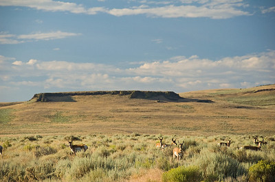 More antelope herds in the early am.