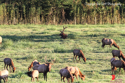20160917-BoxleyValley-Elk-08wm