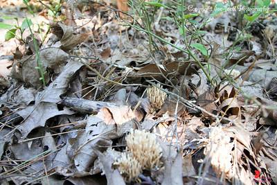 20160918-Ponca Arkansas Area - Hideout Hollow Trail - 17w
