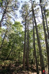 20160918-Ponca Arkansas Area - Hideout Hollow Trail - 04w