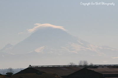 20110210-SeattleTrip-MountRainier-05