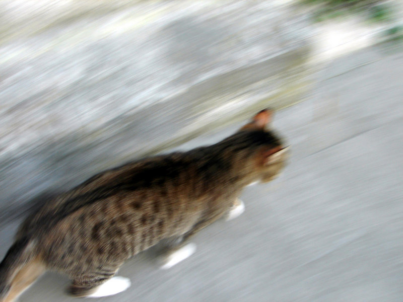 Kitty. These guys were everywhere. they are so prevalent they are now one of the icons of Cinque Terra region.