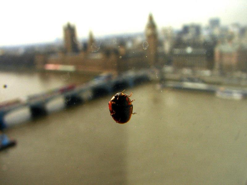 Buggy bug.