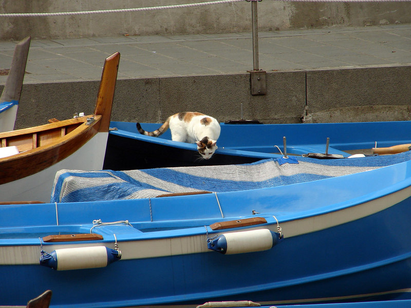 kitty and blue boats.