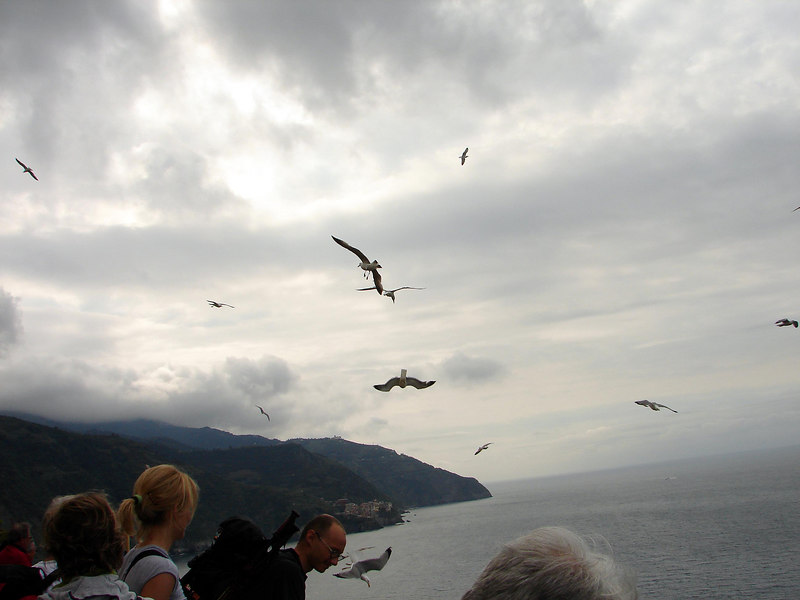 Tourists were thowing pieces of bread out. the gulls would dive and chase the bread hundreds of feet towards the ocean. 1 out of 5 would get some more or less.