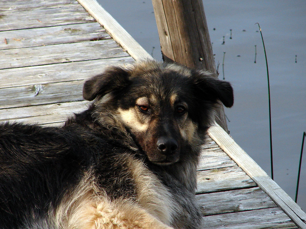 Bailey looks like he was being disturbed from his nap on the dock
