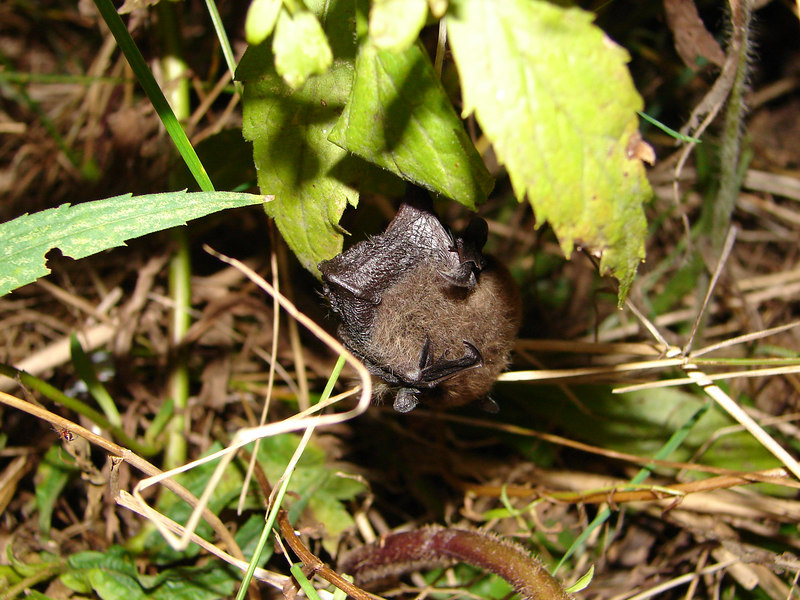 the bat we disturbed. sorry little dude.