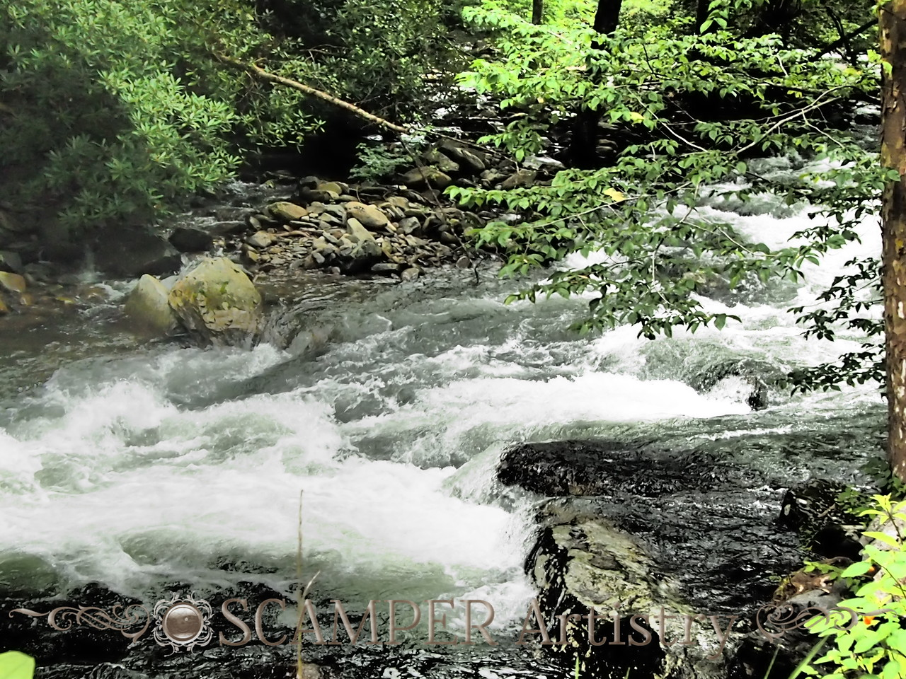 River in Great Smokey Moutains