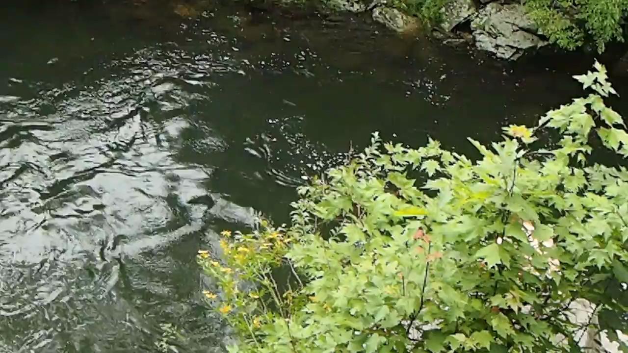 Sinks Swimming Hole at Great Smokey Mountains, TN