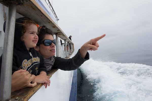 August - Wildlife Cruise