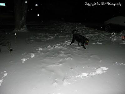 20110202-SnowDrifts-Belle-01