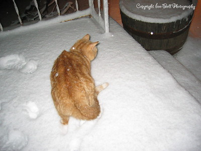 1/20/07  O'Malley on the front porch checking out the snow.
