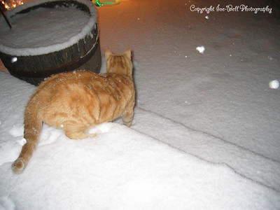 1/20/07  O'Malley is headed toward the front yard.