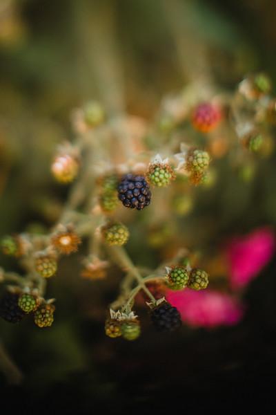 www.mollykate-photography.com