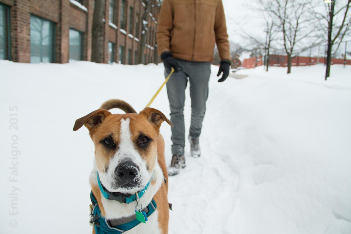 Walking my human.   02-10-15