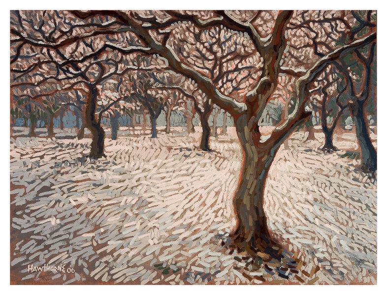 snow trees 2006