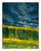 tall grass and storm clouds 2005