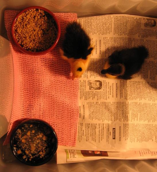 duckies in their new duck bin