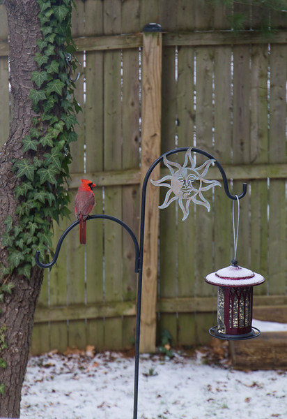 the first cardinal of the season!