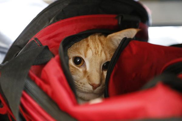 Bag cat!