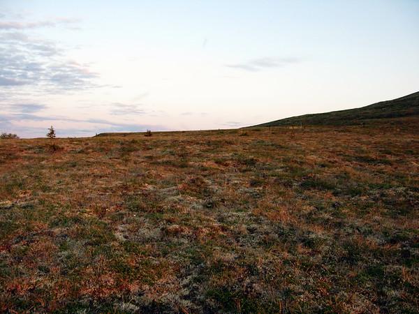 Solstice light on the alpine tundra