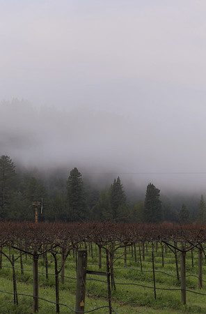 Korbel Winery vineyards, right next to our B&B