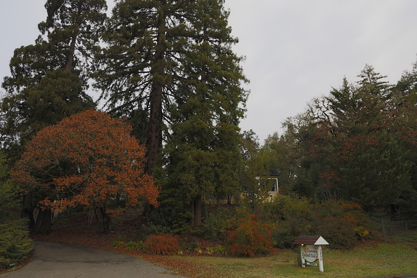 Sonoma Orchid Inn, a lovely B&B among the trees right off the Russian River