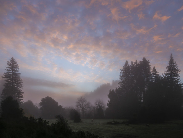Our foggy view of sunrise, across the sheep-filled meadow, the first morning there