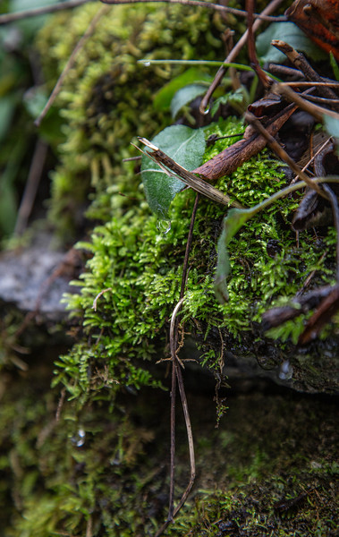 Some lovely moss along the Natural Bridge park