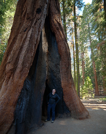 Kaitlin hanging out inside a sequoia