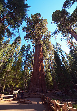 Kailtin with General Sherman, the world's most massive tree