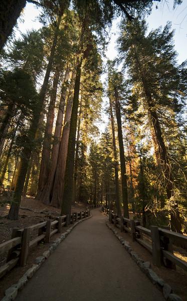 hiking along the General Sherman Tree Trail