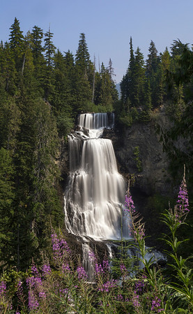 Alexander Falls with fireweed in the foreground, just outside of Whistler