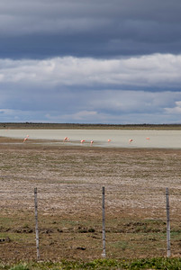 Flamingos along the side of the road, just north of Punta Arenas.