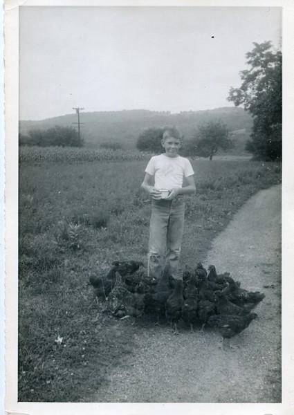 1952 August Bob feeding chickens
