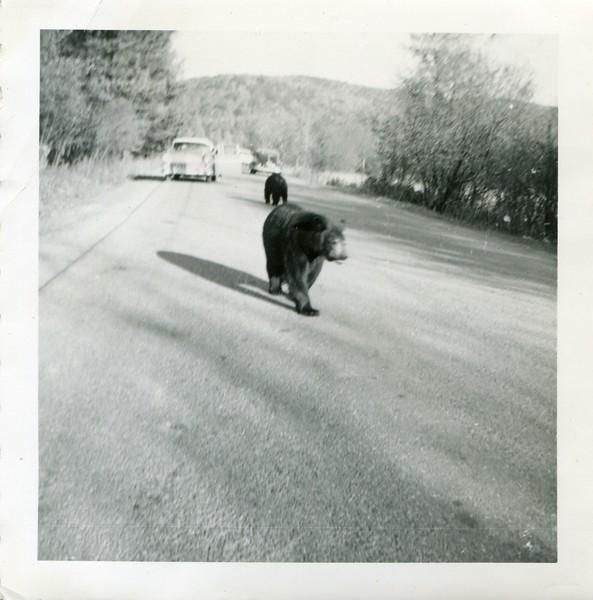 1956 Allegheny State Park