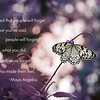 butterfly 2 maya angelou quote