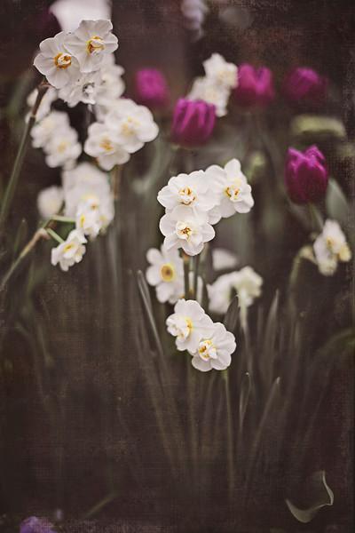 flowers 3 vintage