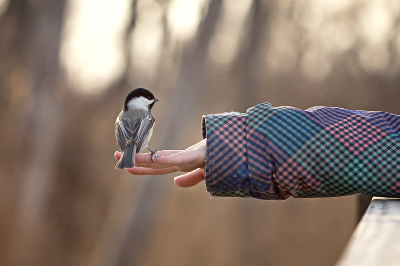 Chickadee childs hand
