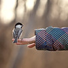 Chickadee childs hand